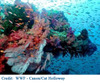 Coral_reefs_wwf_2